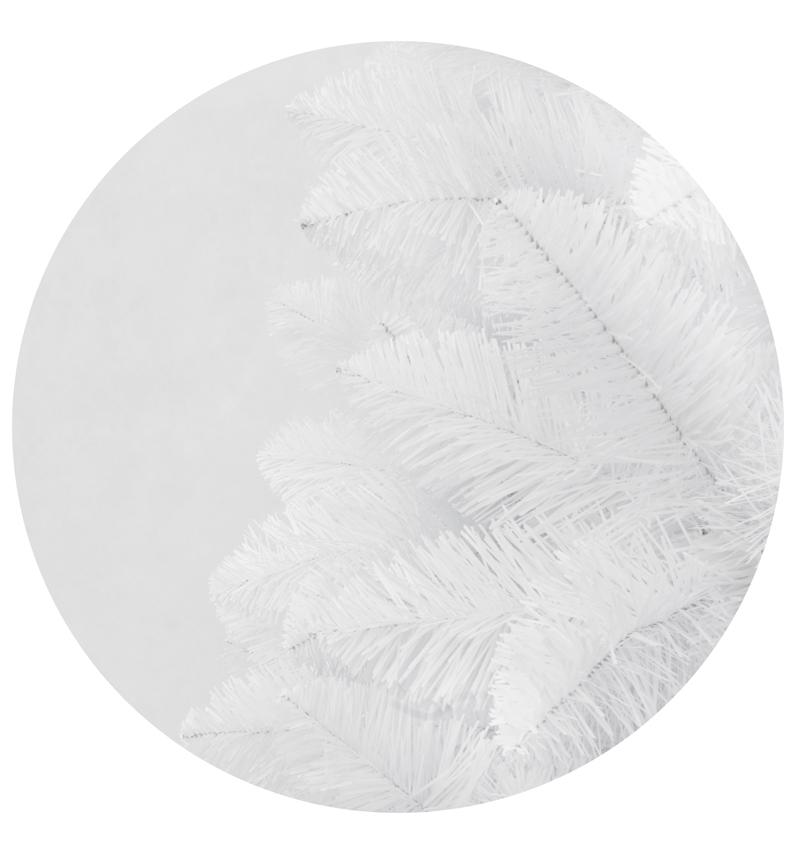 Sosna biała